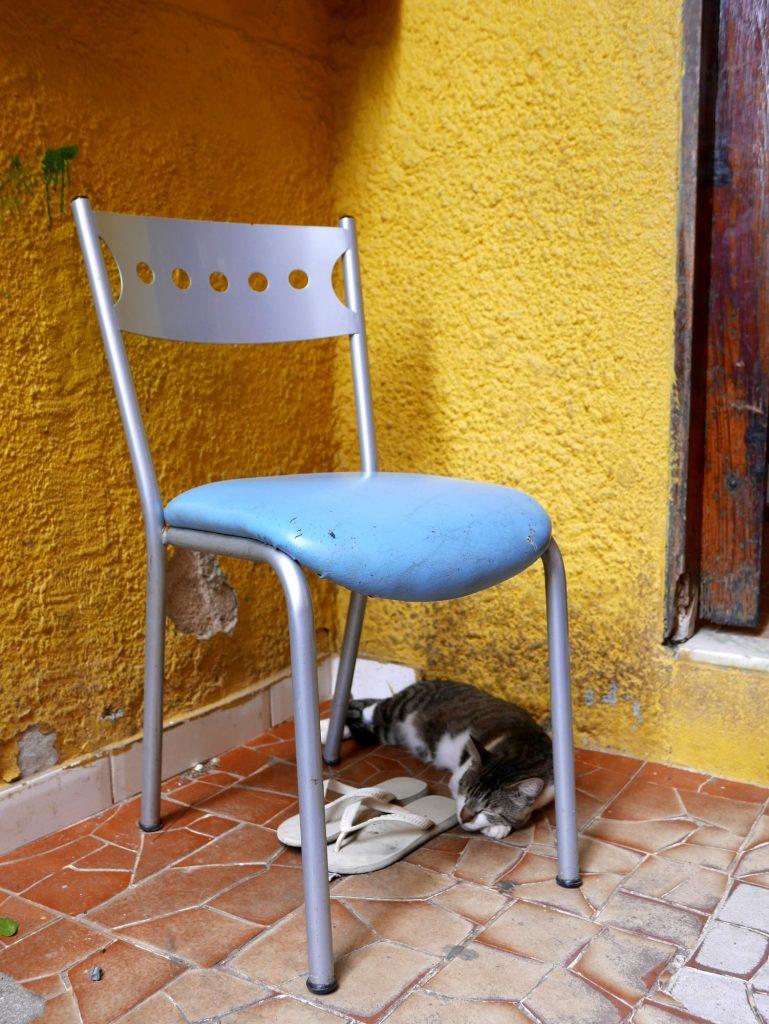 Котик кариока, фавела Росинья